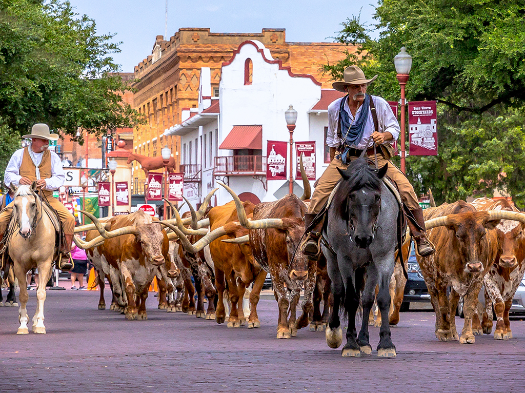 Fort Worth Herd Celebrates 20 Years Travel Texas Office Of The Texas Governor Greg Abbott